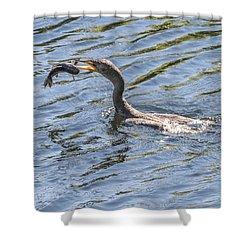 Cormorant Caught Fish Shower Curtain