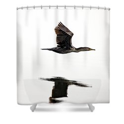 Cormorant In Flight Shower Curtain