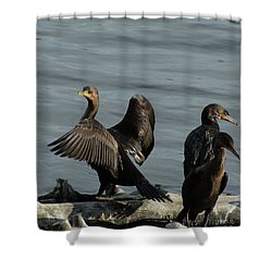 Cormorant On Display Shower Curtain