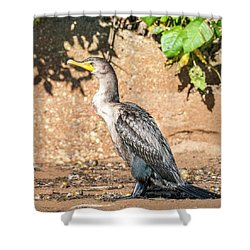 Shower Curtain featuring the photograph Cormorant On Shore by Paul Freidlund