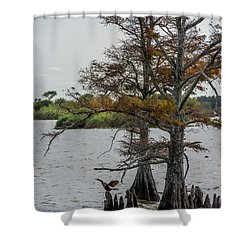 Shower Curtain featuring the photograph Cormorant by Paul Freidlund