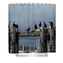 Cormorants Shower Curtain