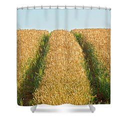 Corn Field Shower Curtain by Heiko Koehrer-Wagner