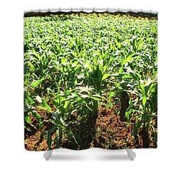 Shower Curtain featuring the photograph Corn Island by Beto Machado