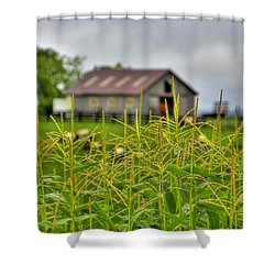 Corn Tops Shower Curtain