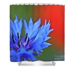 Cornflower Shower Curtain by Heiko Koehrer-Wagner