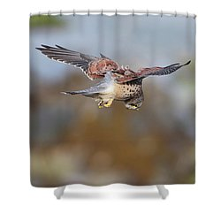 Shower Curtain featuring the photograph Cornish Kestrel Hunting 2 by Nicholas Burningham