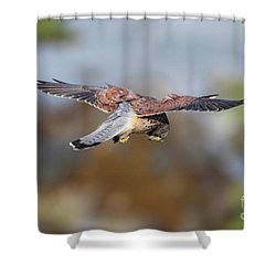 Shower Curtain featuring the photograph Cornish Kestrel Hunting by Nicholas Burningham