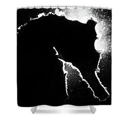 Cortez Seahorse Shower Curtain