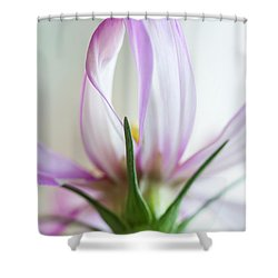 Shower Curtain featuring the photograph Cosmos 4 by Elena Nosyreva