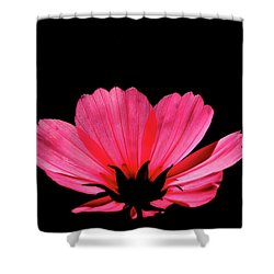 Cosmos Bloom Shower Curtain