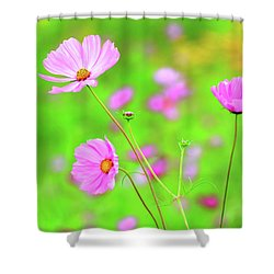 Cosmos Blooming In A Meadow Shower Curtain
