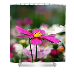 Cosmos Flowers Shower Curtain by Denise Pohl