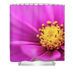 Shower Curtain featuring the photograph Cosmos Pink Sensation by Sharon Mau