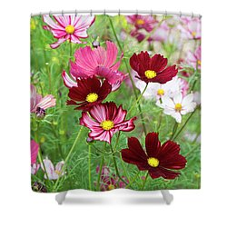 Shower Curtain featuring the photograph Cosmos Velouette by Tim Gainey
