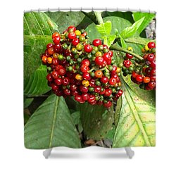 Costa Rican Berries Shower Curtain