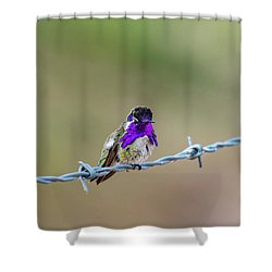 Costa's Hummingbird Shower Curtain