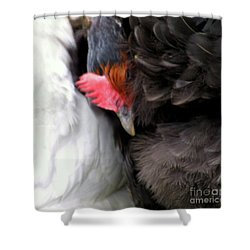 Cosy Time Shower Curtain