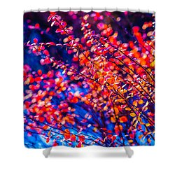 Shower Curtain featuring the photograph Cotoneaster In Winter by Alexander Senin