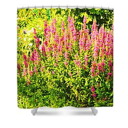Cottage Garden Of Lupines Shower Curtain