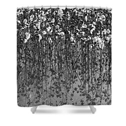 Cotton Abstract In Black And White Shower Curtain