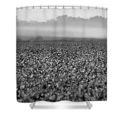 Cotton And Fog Shower Curtain by Michael Thomas