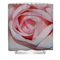 Cotton Candy Rose Shower Curtain by DigiArt Diaries by Vicky B Fuller