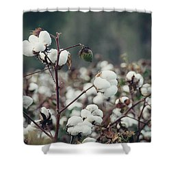 Cotton Field 5 Shower Curtain by Andrea Anderegg