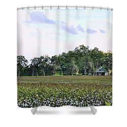 Shower Curtain featuring the photograph Cotton Field In Georgia by Jan Amiss Photography