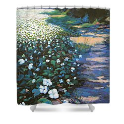 Cotton Field Shower Curtain by Jeanette Jarmon