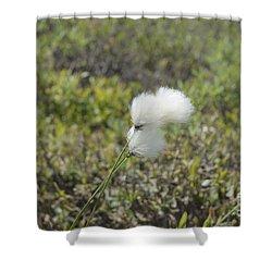 Cotton Grass -eriophorum Virginicum- Shower Curtain by Erin Paul Donovan