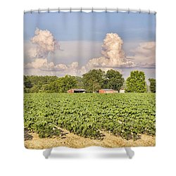 Shower Curtain featuring the photograph Cotton Hasn't Flowered Yet by Jan Amiss Photography