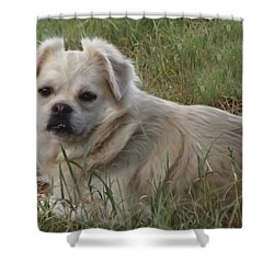 Shower Curtain featuring the digital art Cotton In The Grass by Shelli Fitzpatrick