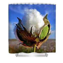 Shower Curtain featuring the photograph Cotton Pickin' by Skip Hunt