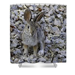Cottontail Shower Curtain by Anne Rodkin