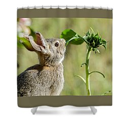Cottontail Rabbit Eating A Sunflower Leaf Shower Curtain
