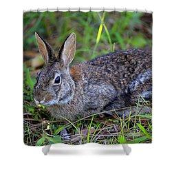 Cottontail Rabbit Shower Curtain