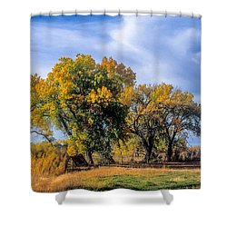 Cottonwood #1 Tree On Ranch Land In Colorado Fall Colors Shower Curtain