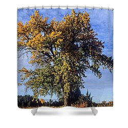 Cottonwood #3 Colorado Ranch Country In Fall Shower Curtain