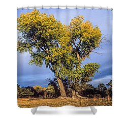 Cottonwood #4 Fall Ranch Colorado Shower Curtain