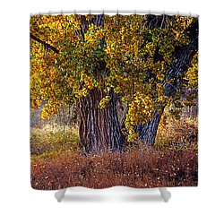Cottonwood #6 Fountain Creek, Colorado In Fall Shower Curtain