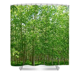 Cottonwood Oasis Shower Curtain by Will Borden