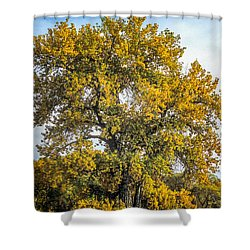 Cottonwood Tree # 12 In Fall Colors In Colorado Shower Curtain
