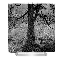 Coulee Oak Shower Curtain