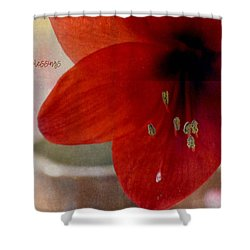 Count Your Blessings Shower Curtain by Robin Dickinson