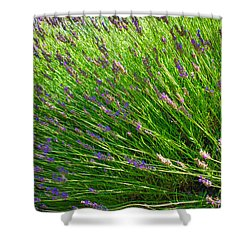 Country Lavender Vi Shower Curtain