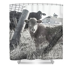 Shower Curtain featuring the photograph Country Living For These Cows by Toni Hopper