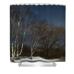 Country Roadside Birch Shower Curtain