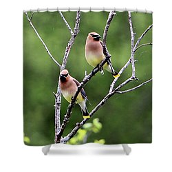 Couple Cedar Waxwing Shower Curtain by Marle Nopardi