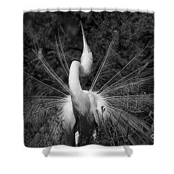 Courtship Plumes Shower Curtain